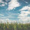 【田舎暮らしのお仕事指南】スローライフにおすすめの畑仕事
