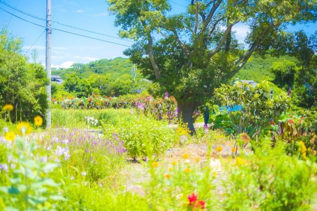 農地を花畑にしてはダメってホント?(ホントです)
