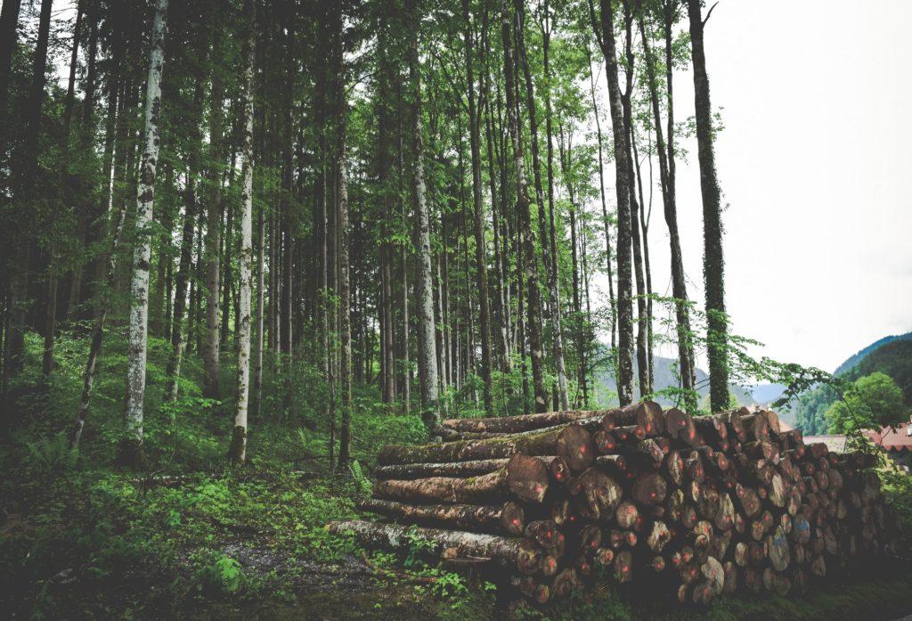 林業インターンシップ制度について(まとめ)